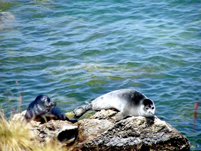 Lake Baikal Animals The gallery for -->...