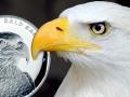2014-BALD-EAGLE-FEAT2