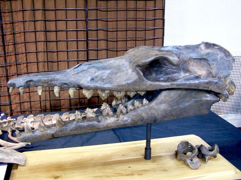 Basilosaurus