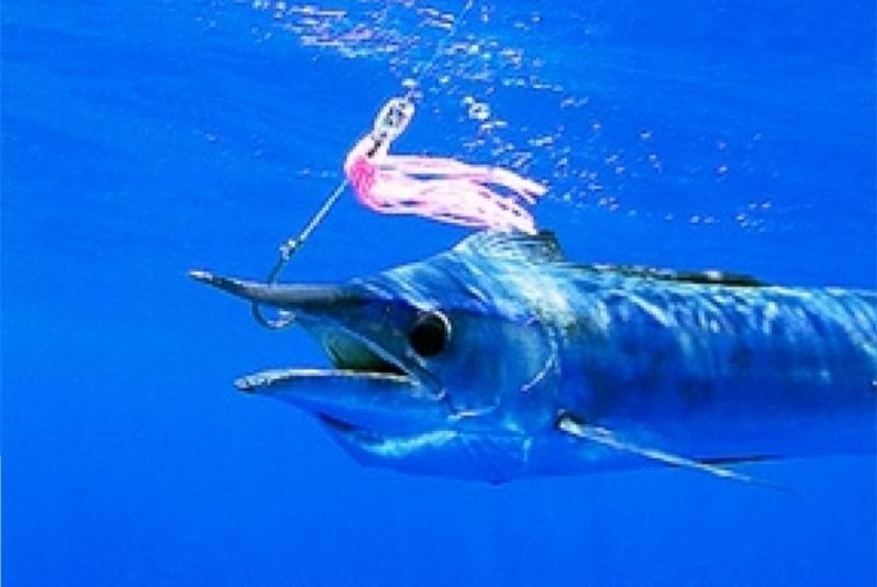 """Blue Marlin – """"OCEAN TREASURES"""" Memorial Library"""