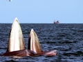 Bryde's Whale