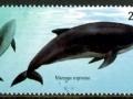 Burmeister's Porpoise