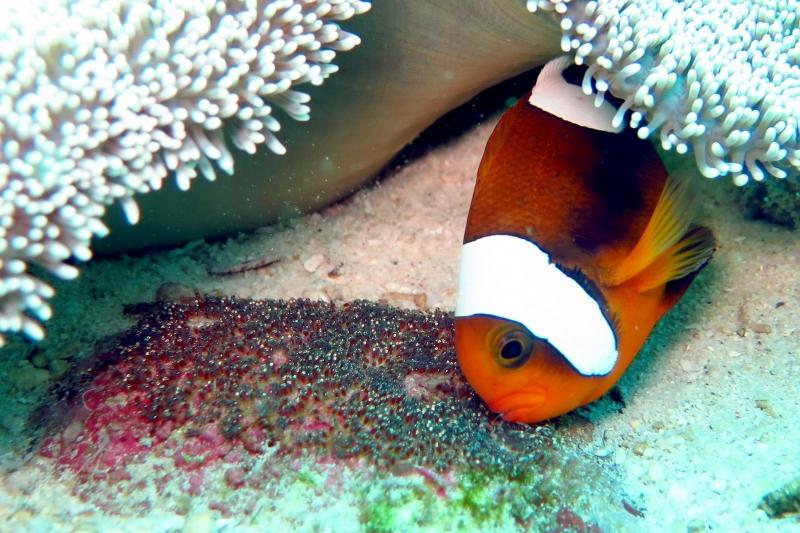 """clownfish  """"ocean treasures"""" memorial library"""