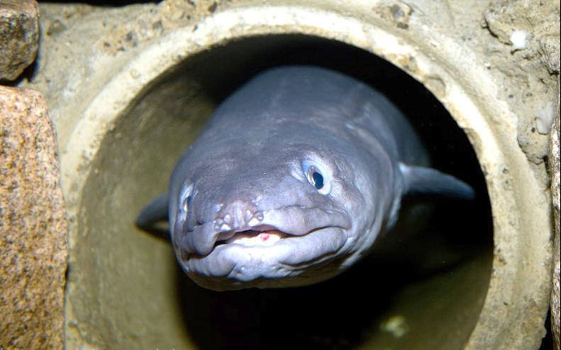 conger dating Define conger: conger eel a genus consisting of the typical conger eels.