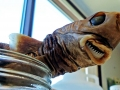 Cookie-Cutter Shark