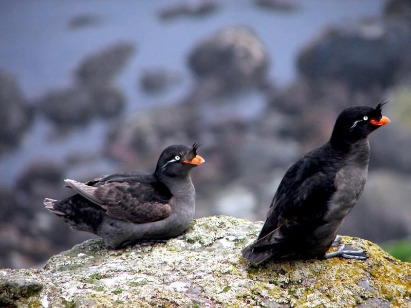 Alphabetic List of Birds  Bird Photography