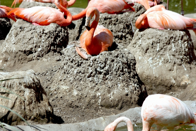 """Flamingo Nests Flamingo – """"OCE..."""