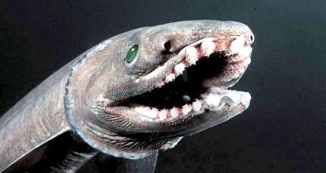 Dinosaurs Era Frilled Shark – &quo...
