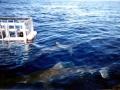 Galápagos Shark