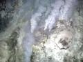 Giant Tube Worm