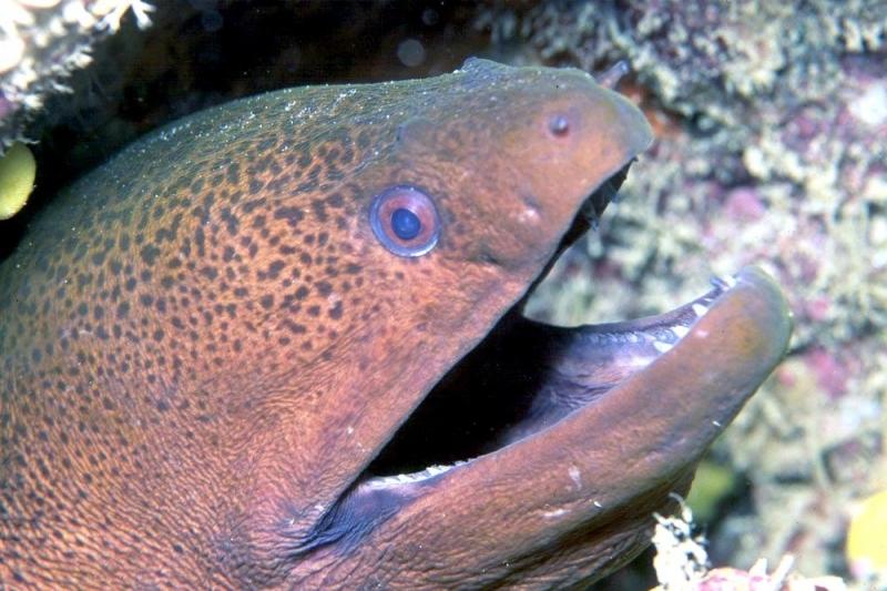 Giant Moray Eel Quot Ocean Treasures Quot Memorial Library