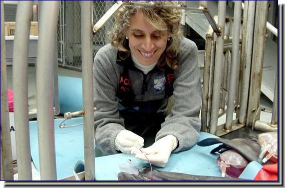 Dr. Shannon R. Atkinson