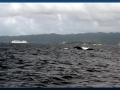 christa-first-humpback-whale