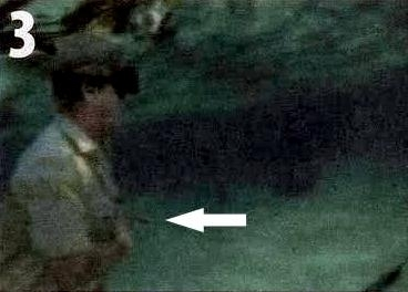 Steve Irwin's Final Day......note: Arrow pointing at the impaled stingray barb.