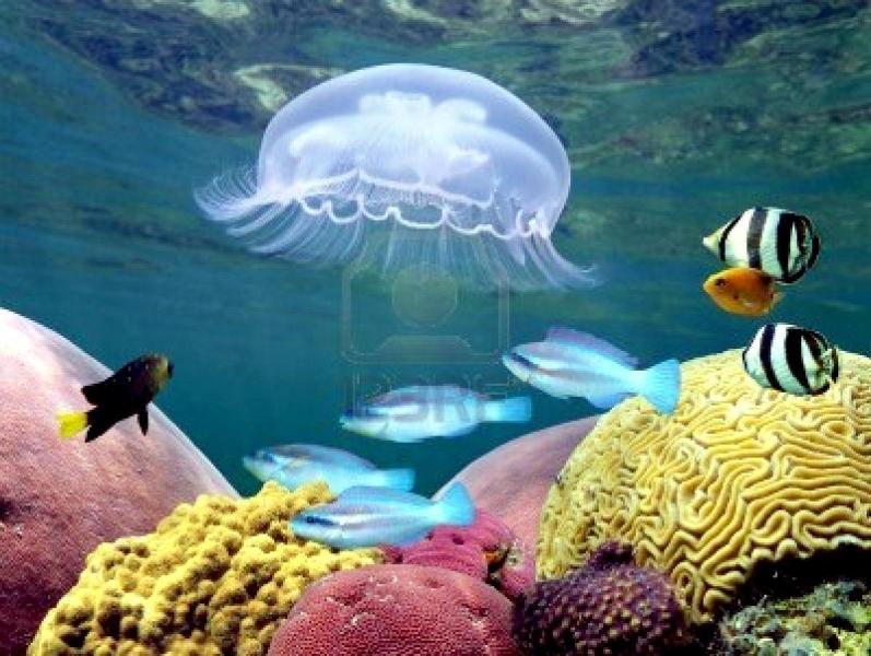 Moon Sea Jelly