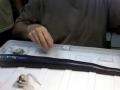 Naval Shipworm