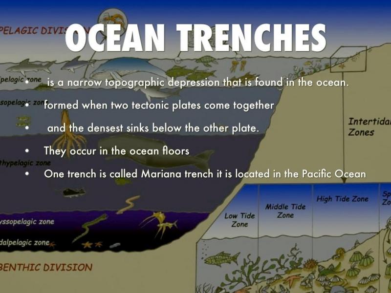 Ocean Depths Quot Ocean Treasures Quot Memorial Library