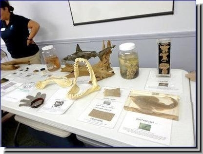 Ocean Treasures, the program table set-up