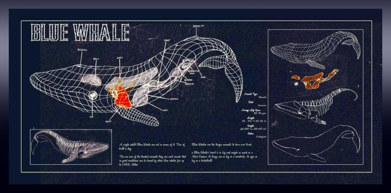 Student hand-outs during a typical program session:  BLUE WHALE BLUEPRINT