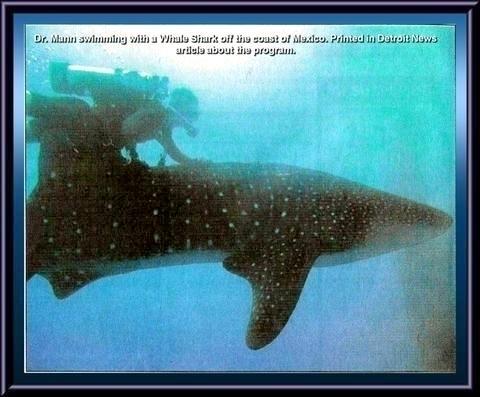 Photo taken by Stan Evanson of Dr. Mann interacting with a Whale Shark off the coast of Mexico and used in the Detroit News article about the program.