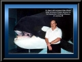 "Dr. Mann with an animated Killer Whale during his position as Project Director for the Impression 5 Science Museum's ""World of Whales"" 1995 exibition in Lansing, MI"