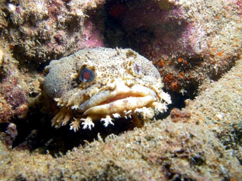 Toadfish Related Keywords - Toadfish Long Tail Keywords ...