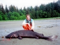 Pacific Sleeper Shark