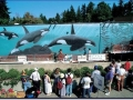 """Robert Wyland's Whaling Wall #055 """"Killer Whales A-30 Subpod"""" at the Vancouver Aquarium in Stanley Park in Vancouver, BC, Canada (175 feet long x 14 feet high) Dedicated August 15, 1994 by Dr. John Ford to the memory of the """"Father of Killer Whale Research"""" Dr. Michael A. Bigg (special note: The mural was partially destroyed by vandals and is no longer accessible to the public.)"""