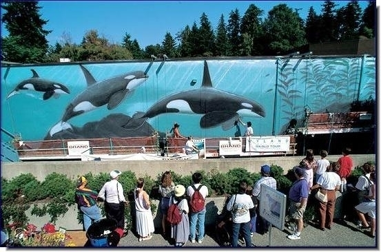 "Robert Wyland's Whaling Wall #055 ""Killer Whales A-30 Subpod"" at the Vancouver Aquarium in Stanley Park in Vancouver, BC, Canada (175 feet long x 14 feet high) Dedicated August 15, 1994 by Dr. John Ford to the memory of the ""Father of Killer Whale Research"" Dr. Michael A. Bigg (special note: The mural was partially destroyed by vandals and is no longer accessible to the public.)"