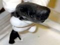 Pocket Shark