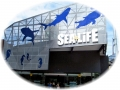 Sea Life - Melbourne Aquarium