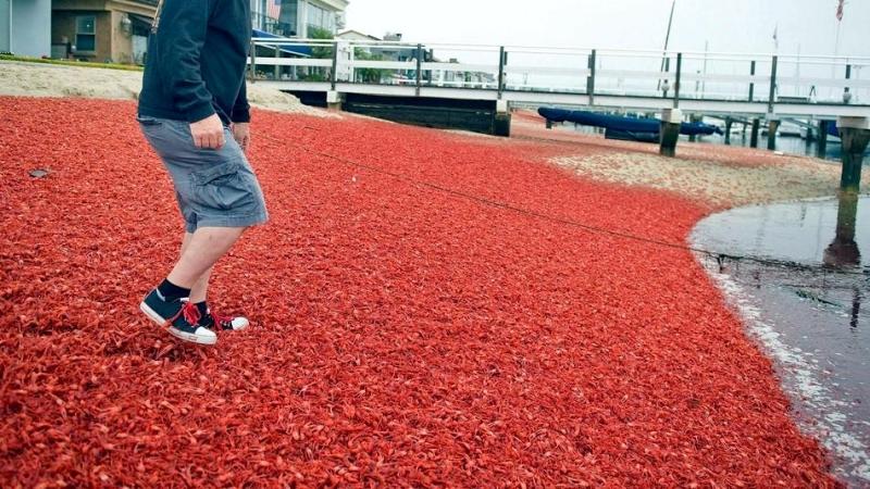 """Red Crab – """"OCEAN TREASURES"""" Memorial Library"""