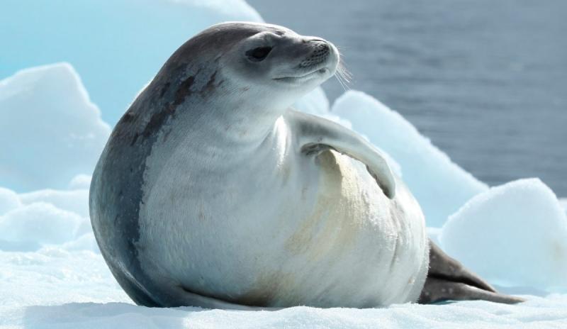 Ross Seal Quot Ocean Treasures Quot Memorial Library