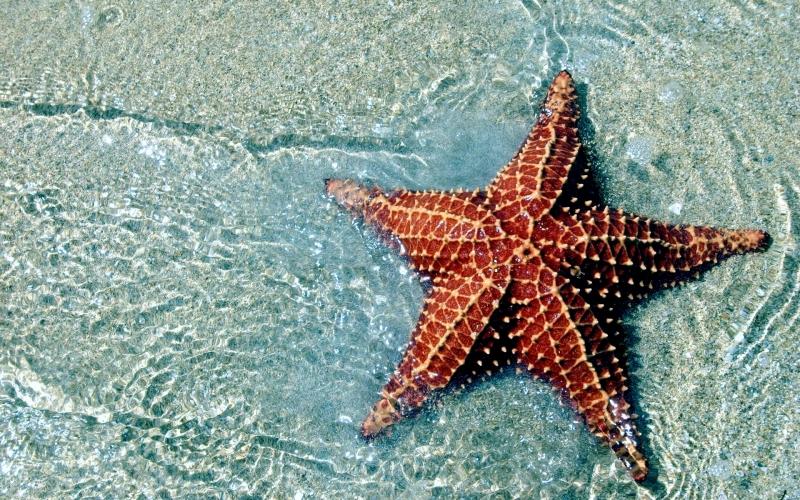 sea star ocean treasures memorial library