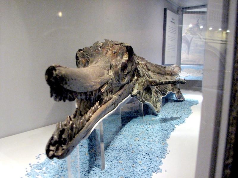 Shastasaurus