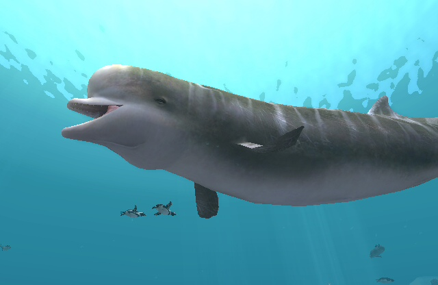 Southern_Bottlenose_Whale