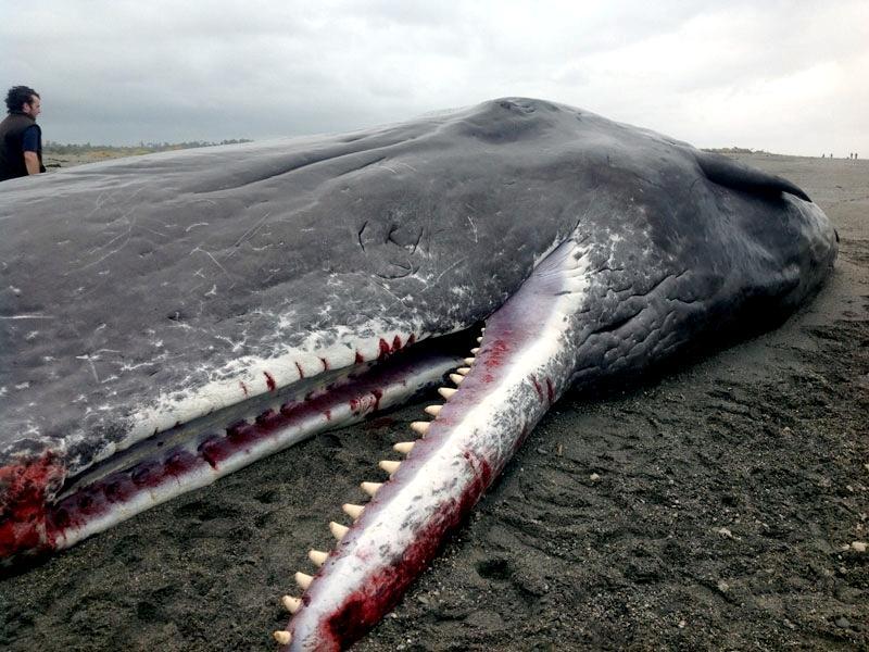 картинки внутренности кита руке женщины