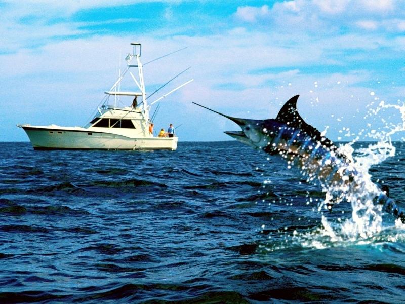 рыба меч в лодке