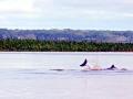 Tucuxi Dolphin