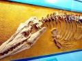 Tylosaurus