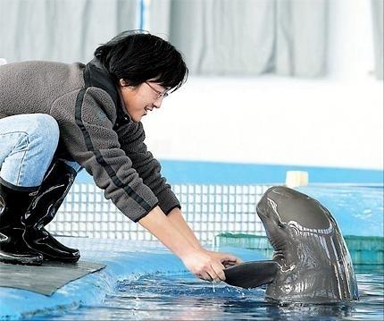 Yangtze River Finless Porpoise