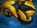 Yellow-bellied Sea Snake
