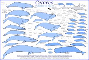 Cetacea_whales-1mup6fr