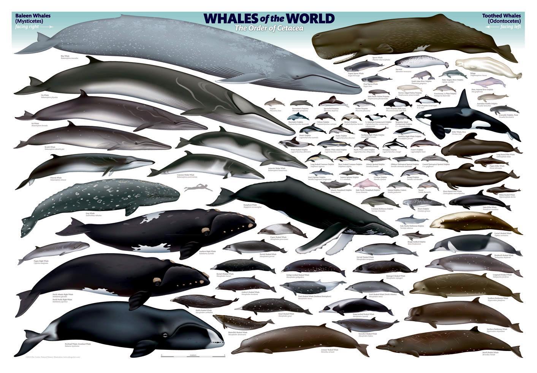 """World of Whales – """"OCEAN TREASURES"""" - 203.8KB"""