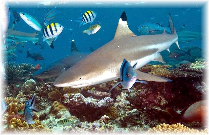 TYPES OF SHARKS  Kidzone