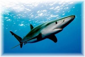 blue-shark-andy