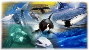 whaleofatime.org